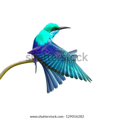 Colorful Bird on white background - stock photo