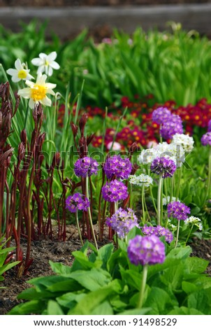 Colorful Blooming  Flower Bed in Early Springtime - stock photo