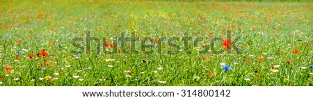 Colorful blooming wild flowers on the idyllic meadow at spring time in the sunshine - stock photo