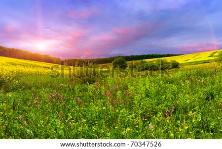 Colorful blossom field in the summer - stock photo