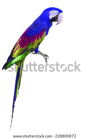 Colorful blue and green Macaw bird isolated on white background - stock photo