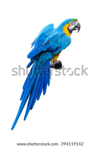 Colorful blue and Yellow Macaw isolated on a white background - stock photo