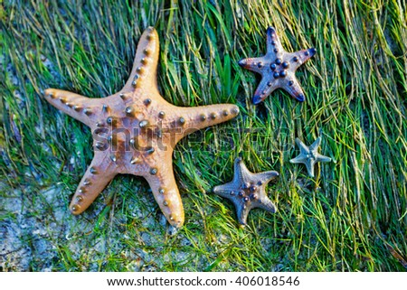 Colorful blue and yellow starfish - stock photo