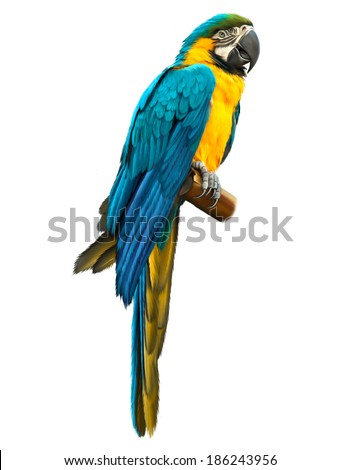 Colorful blue parrot macaw isolated on white background - stock photo