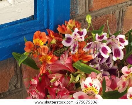 colorful bouquet of flowers Alstroemeria near the wall at home - stock photo