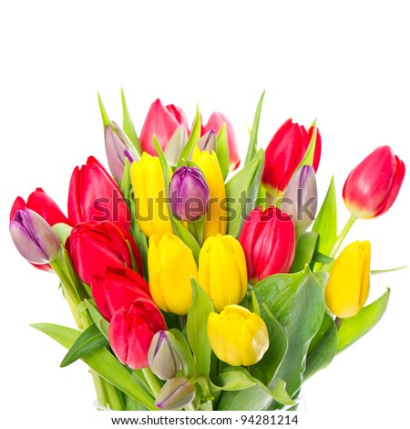 colorful bouquet of fresh spring tulip flowers on white background