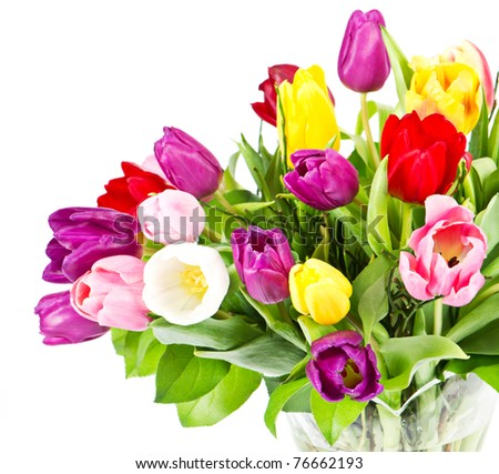 colorful bouquet of fresh tulip flowers