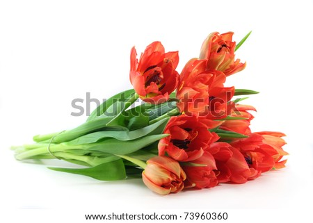 colorful bouquet of tulips on a white background
