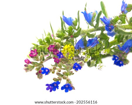Colorful bouquet of wild flowers isolated on white