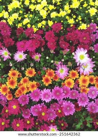Colorful bunch of flowers background - stock photo