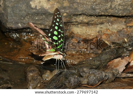 colorful butterfly in nature thailand - stock photo