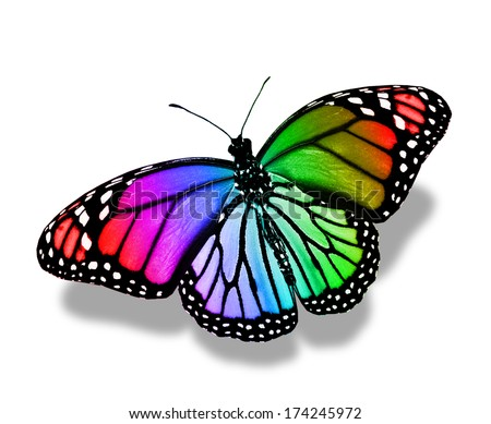 Real Colorful Butterfly Pictures