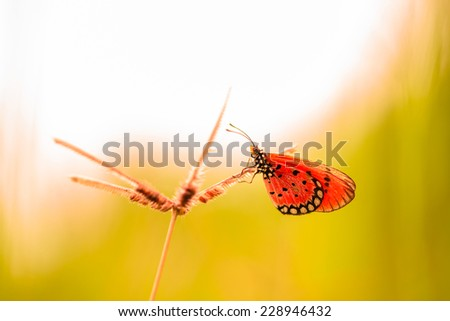 Colorful butterfly on grass flower - stock photo