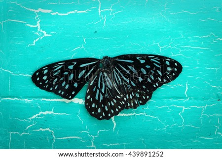colorful butterfly on grunge background. - stock photo