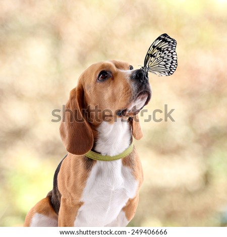 Colorful butterfly sitting on dog's nose on autumn background - stock photo