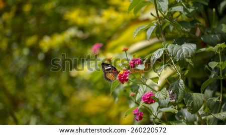 Colorful butterfly with beautiful flowers  - stock photo