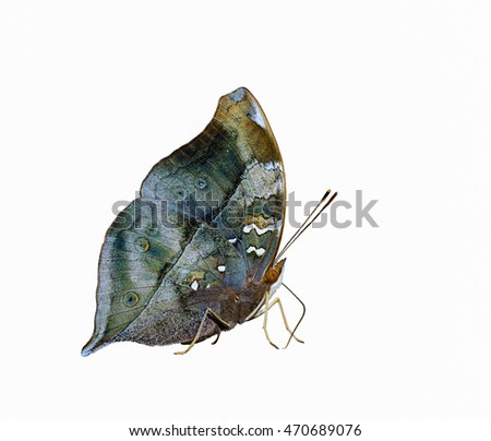 colorful butterfly  with clipping path