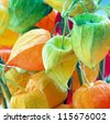 colorful Cherry Branch /chinese lantern - stock photo