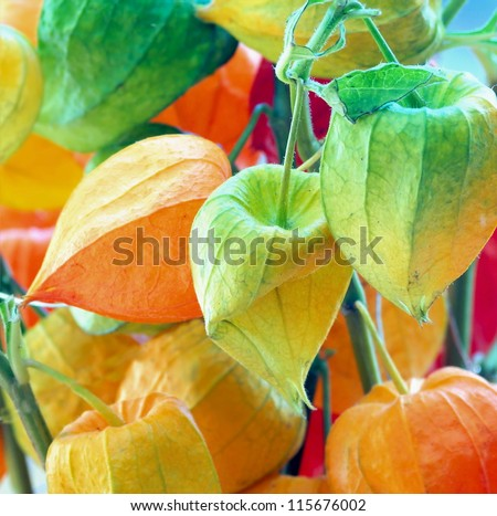 colorful Cherry Branch /chinese lantern