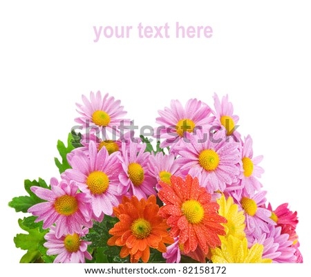 Colorful chrysanthemum bouquet flowers isolated on white background with sample text - stock photo
