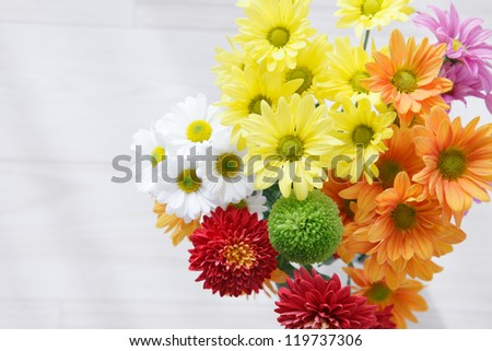 Colorful chrysanthemum with space for copy - stock photo