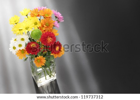 Colorful chrysanthemum with space for copy
