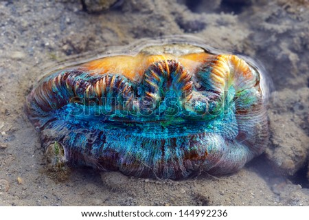 Colorful coral and sea life sitting on mud flats out of the water. - stock photo