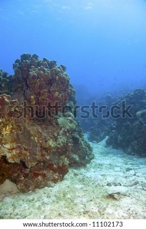 colorful coral reef and blue caribbean sea water near roatan honduras - stock photo