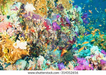 Colorful Coral Reef in the Egyptian Red Sea - stock photo