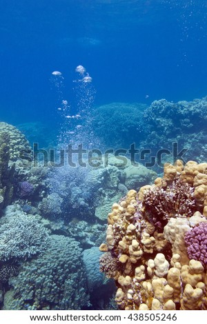 colorful coral reef with air bubbles at the bottom of tropical sea - stock photo