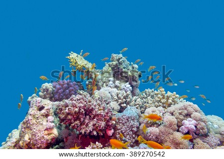 colorful coral reef with exotic fishes anthias at the bottom of tropical sea on blue water background, underwater - stock photo