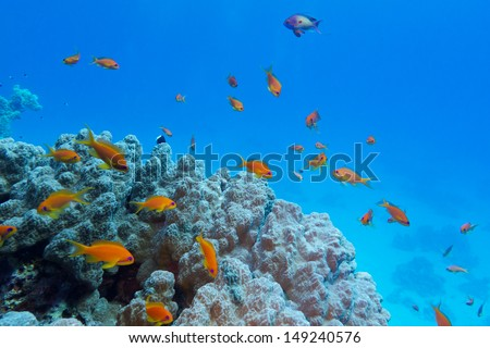 colorful coral reef with hard coral and exotic fishes at the bottom of tropical sea on blue water background