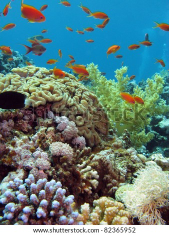 colorful coral reef with school of fishes