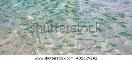 colorful coral reef with shoal of exotic fishes - stock photo