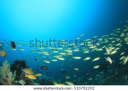 Colorful coral reef with tropical fish in ocean