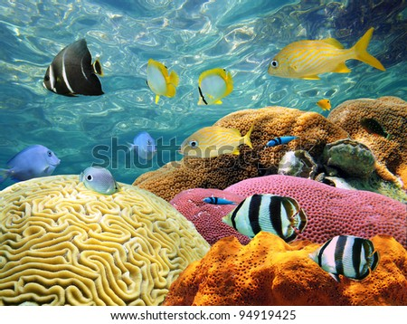 Colorful corals and tropical fish under water surface - stock photo