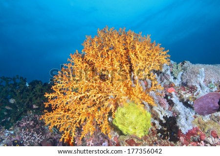 Colorful corals marine life  - stock photo