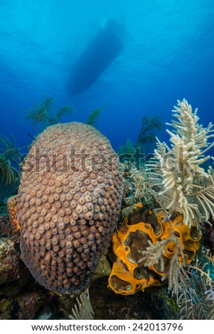 Colorful corals with a boat on the blue background - stock photo