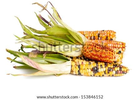 colorful corn cobs isolated on white - stock photo