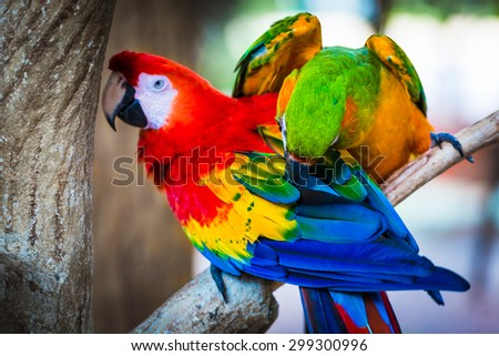 Colorful couple macaws sitting on log