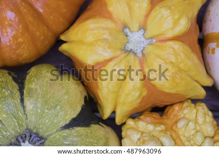 Colorful decorative autumn gourd close up.