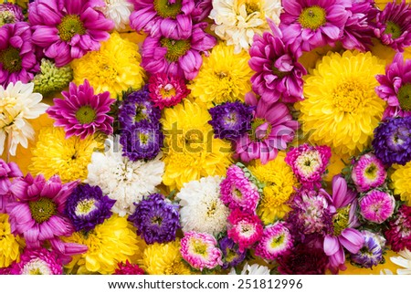 Colorful design pattern of flower texture and background - stock photo