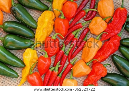 Colorful display of different types of hot peppers - stock photo
