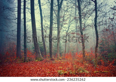 Colorful dreamy; foggy Autumn forest scene background. - stock photo