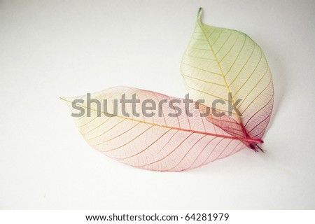 colorful dried leaves.