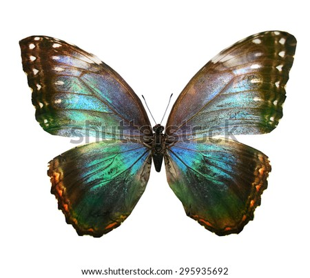 Colorful exotic butterfly on white background - stock photo
