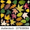 Colorful Fall Leafs Isolated on Black Background - stock photo