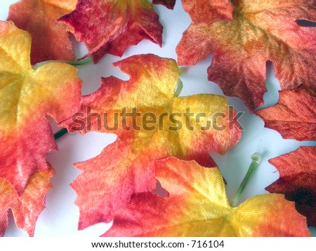 Colorful fall leaves.
