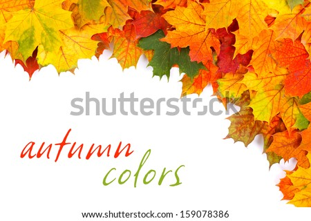 Colorful fall leaves border with place for your text on white  - stock photo