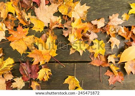 Colorful fall leaves on a bench.  Mackinac Island, MI, USA. - stock photo